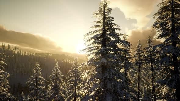 Thumbnail for Fantastic Evening Winter Landscape