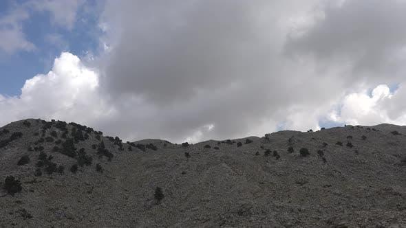 Thumbnail for Rare Trees On Arid Stony Mountain Ridge