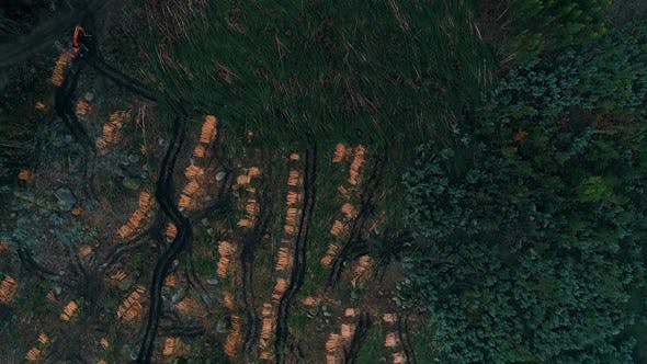 Thumbnail for Mountain Forest With Deforestation