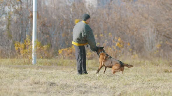 Thumbnail for A Man Training His German Shepherd Dog - the Dog Strongly Clenching Teeth on a Sleeve