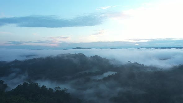 Drone shot of the Amazon rainforest early in the morning while the forest is still covered in mist