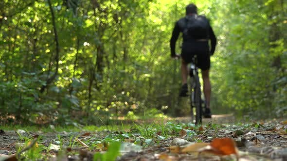 Thumbnail for A Cyclist Rides Down a Path Through a Forest - Rear View From Ground