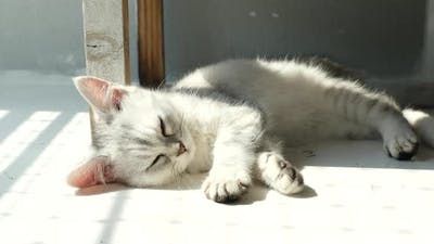 Cute Kitten Sleeping Under Sunlight