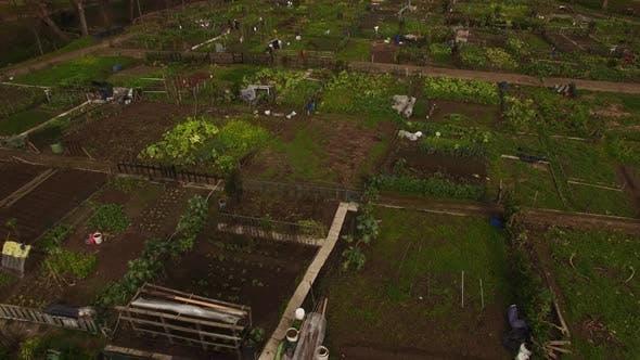 Thumbnail for Community Garden