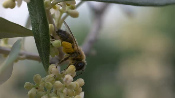Bee Flower Slow Motion