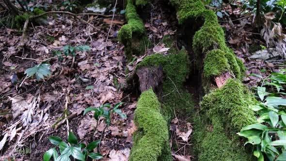 Moss growing on fallen tree