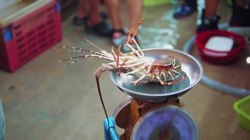 Slow motion shots of spiny lobster on the scales for sale at night seafood market