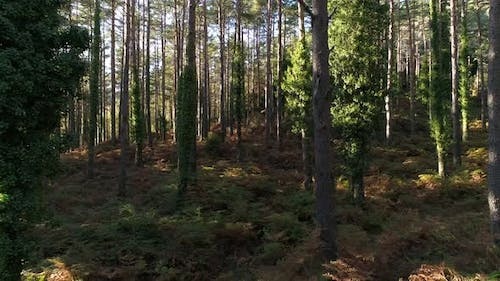 Forest 4k