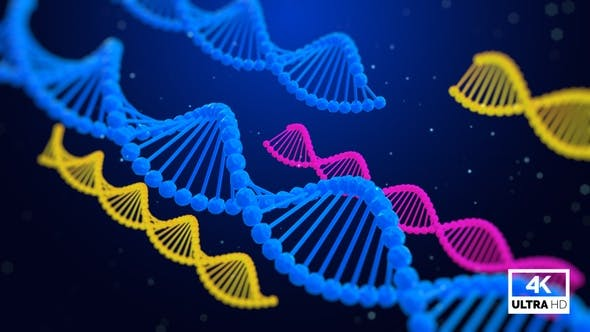 Thumbnail for Structure Of The DNA Molecule