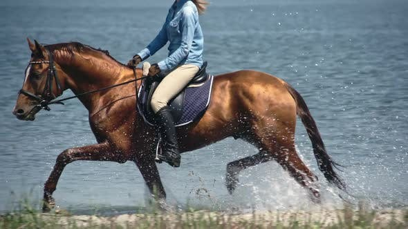 Thumbnail for Russian Don Mare Trotting Trough Lake