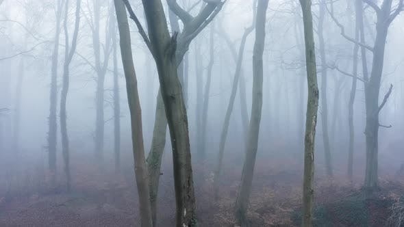 Aerial drone video of haunted mysterious woods with spooky trees in thick mist and fog, woodlands fo