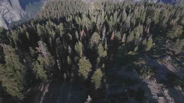 Aerial view of Yosemite National Park, California, USA