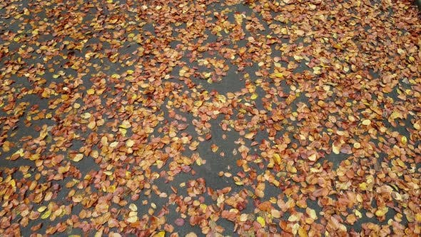 Thumbnail for Autumn park in November 3