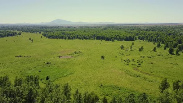 Cover Image for Aerial: Flying in the Highlands Over the Forest and Field. View of the Pasture Where Livestock