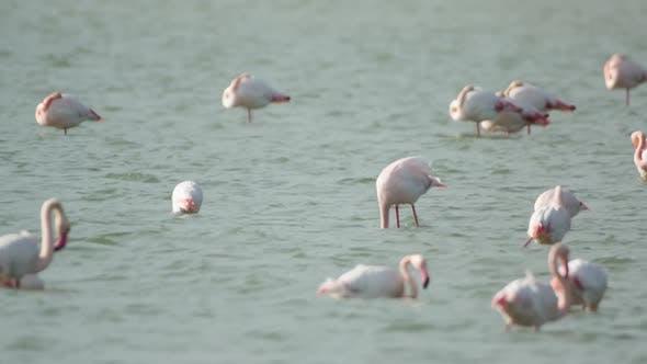 flamingo bird nature wildlife reserve delta ebro lagoon