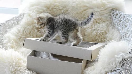 Cute Kittens Playing On A Box