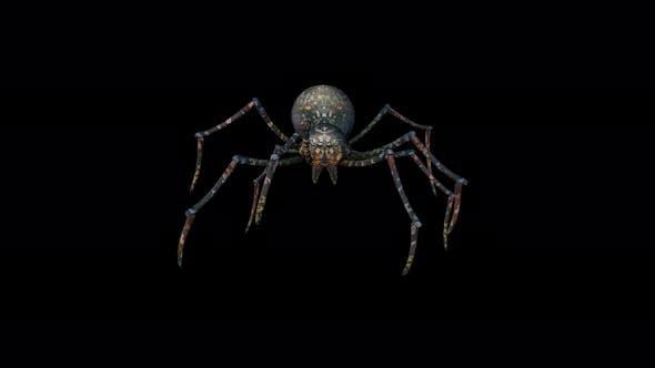 Thumbnail for 4K Spider Walk