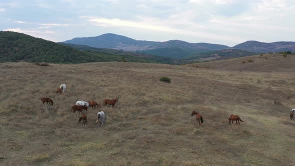 Thumbnail for A Herd Of Horses Shot With A Drone In The Wild 1