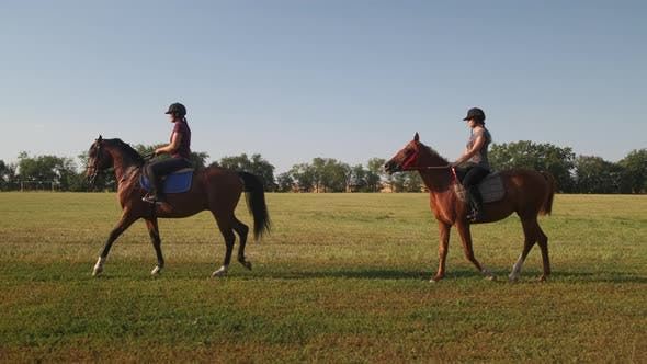 Horse Dressage in the Vast Field