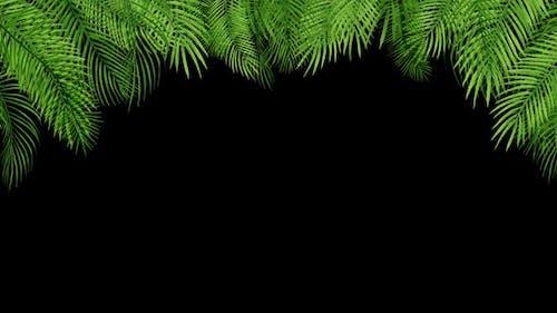 Palm Leaves 04 HD