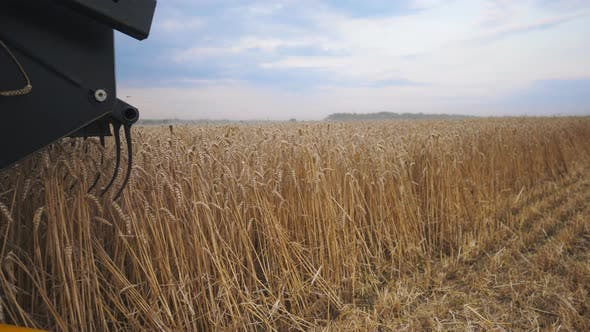 Thumbnail for Close Up Knife of Combine Spinning and Cutting Ears of Wheat. Harvester Riding Through Field and