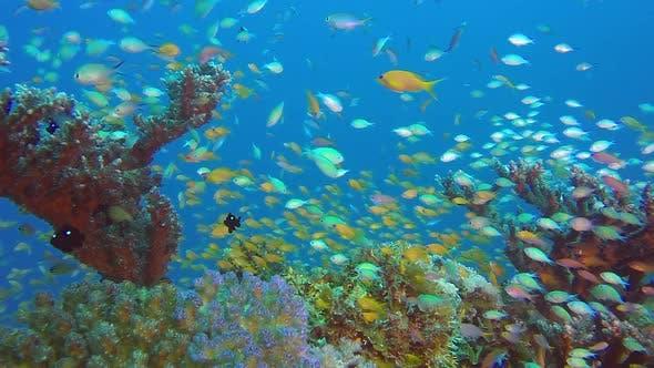 Thumbnail for Underwater Tropical Scene Marine