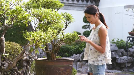 Cover Image for Woman taking photo with cellphone on bonsai