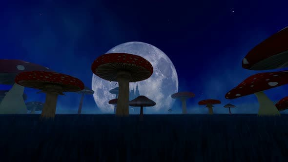 Fantastic Night Landscape With Mushrooms And Fog