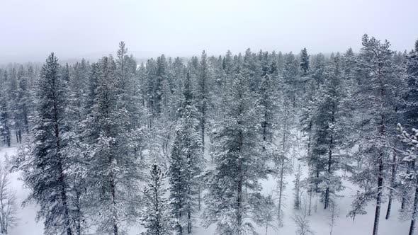 Cover Image for Fliegen durch riesige Bergbäume am Abend bei starkem Schneefall und Nebel in den Bergen im
