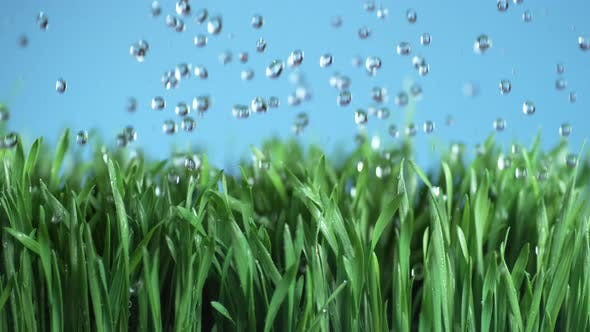 Thumbnail for Water falling onto green grass in super slow motion, shot with Phantom Flex 4K