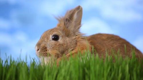 Rabbit sitting in grass