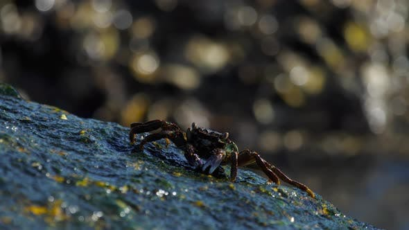 Cover Image for Crabs on the Rock at the Beach