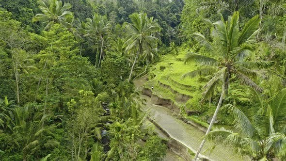 Drone Over Tegalalang Terraced Fields