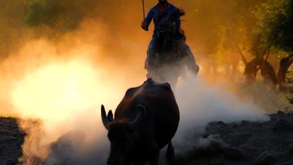 Thumbnail for Cowboy Bull At Sunrise