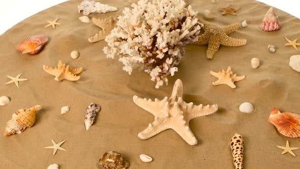 Thumbnail for Sea Shells Over a Sand, White, Rotation