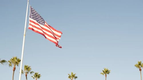 Palms and American Flag Los Angeles California USA