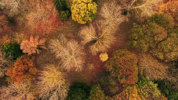 Thumbnail for Aerial top-view  forest in autumn