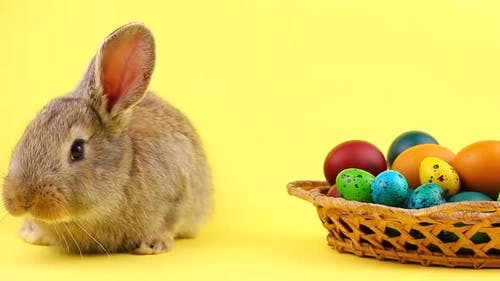 Little Brown Fluffy Bunny Sitting on a Pastel Yellow Background with a Wooden Basket Full of Ornate