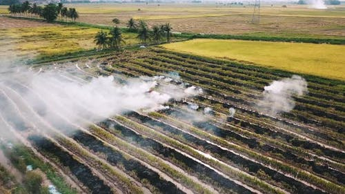 Open fire at rice paddy field causing air pollution