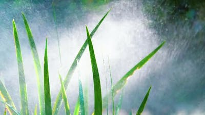 Fresh Watered Grass in the Garden