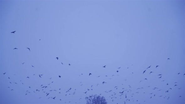 Thumbnail for Birds Fly in Winter Conditions