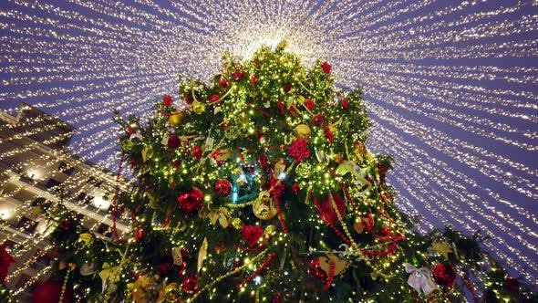 Cover Image for Decorated Christmas Tree Dressed Sparkles with Illumination