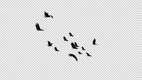 Raven Flock - 13 Vögel - Flying Loop