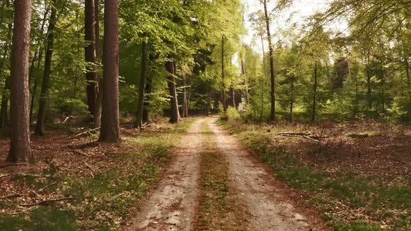Thumbnail for Along Forest Pathway