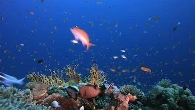 Coral Garden Reef