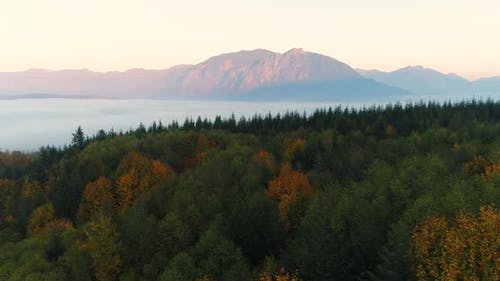 Aerial Arc Shot Drone View Above Forest Woodlands In Snoqualmie Valley North Bend Washington