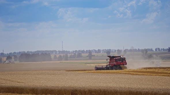 Thumbnail for Modern combine harvesting grain. Grain harvester combine work in wheat field