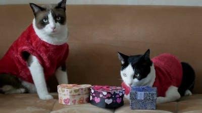 Santa Cats