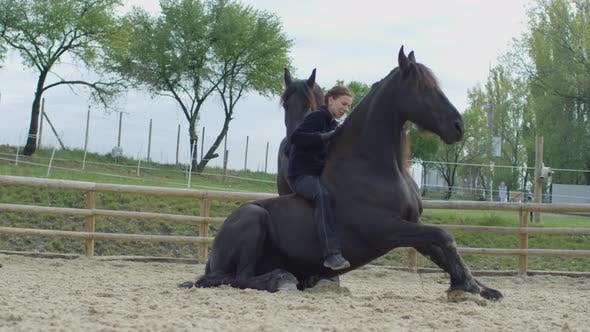 Cover Image for Horse standing up