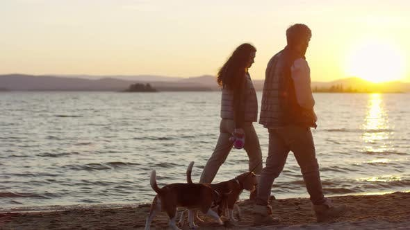 Thumbnail for Couple Walking with Dogs along Lakeshore at Sunset